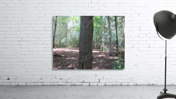Landscape (166)