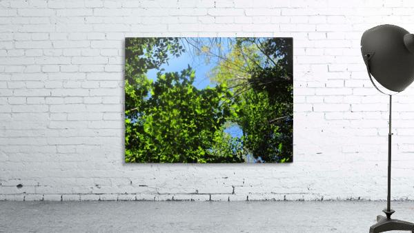 Landscape (181)