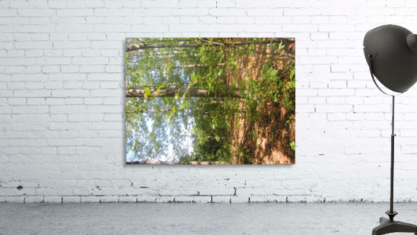 Landscape (105)