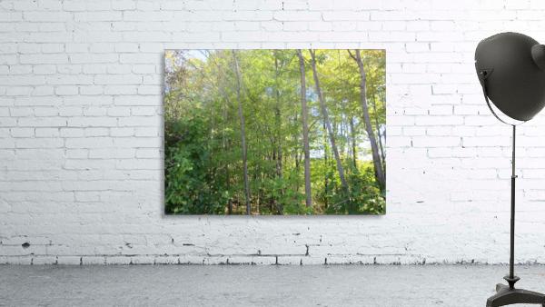 Landscape (288)