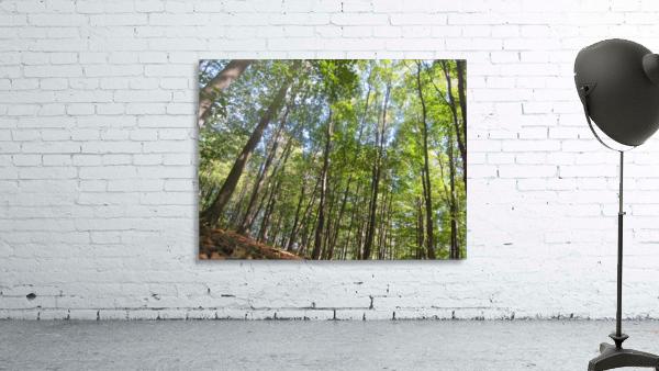 Landscape (249)