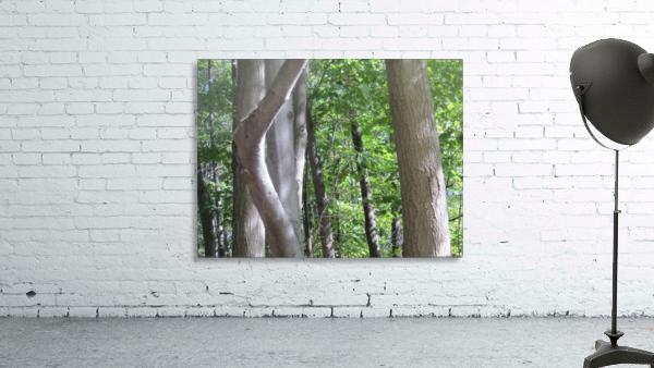 Landscape (266)