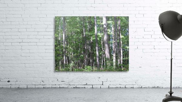 Landscape (87)