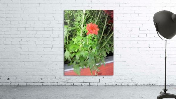 Flowers (55)