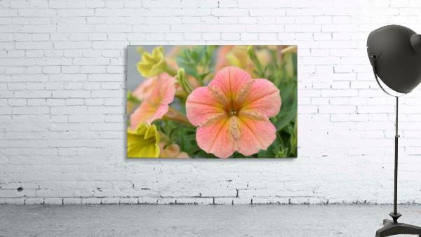 Orange Flowers Photograph