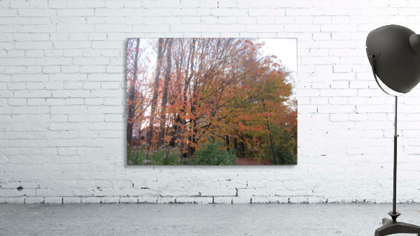 Fall Season (11)