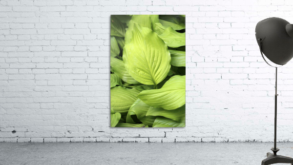 Softly Curving Foliage 062618