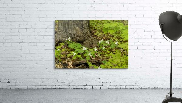 Trillium Woods 10