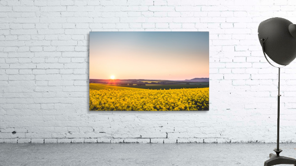 Beautiful sunset over the yellow rapeseed field.