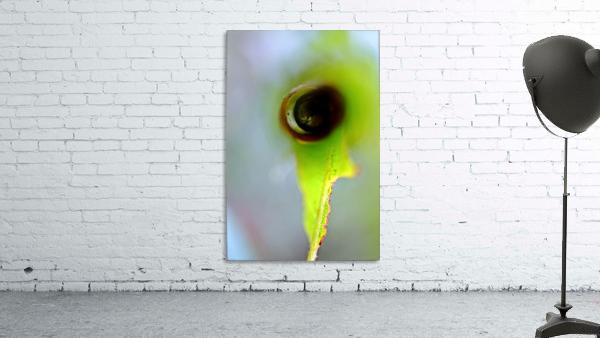 Curled Leaf 03