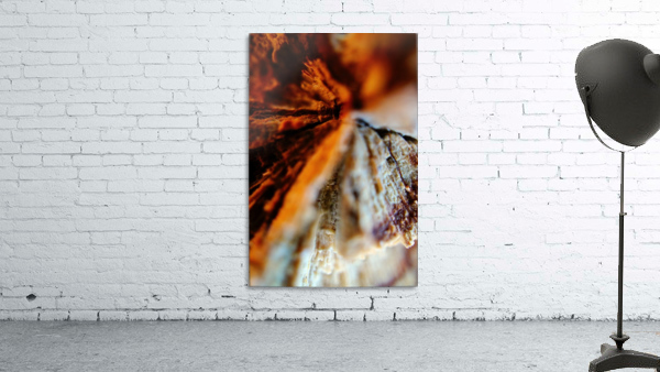 Abstract Macro Nature Photography 110