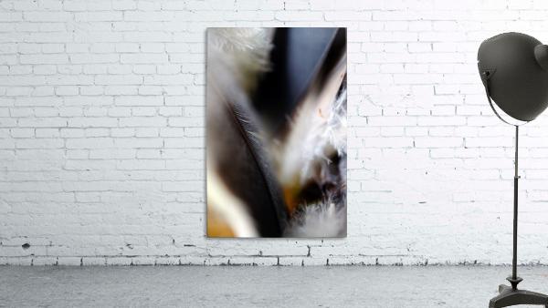 Abstract Macro Nature Photography 99