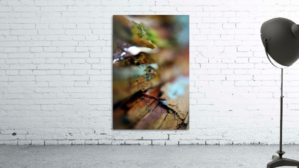 Abstract Macro Nature Photography 95