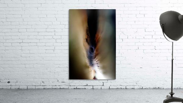 Abstract Macro Nature Photography 85