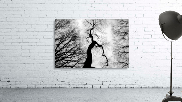 Black and White Abstract Tree 02