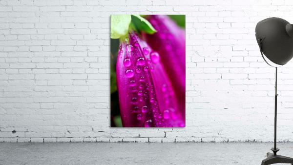 Macro Raindrop Photography Art 06