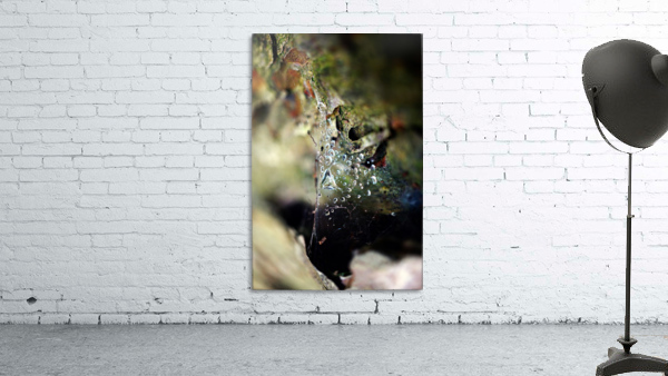 Macro Raindrop Photography Art 05