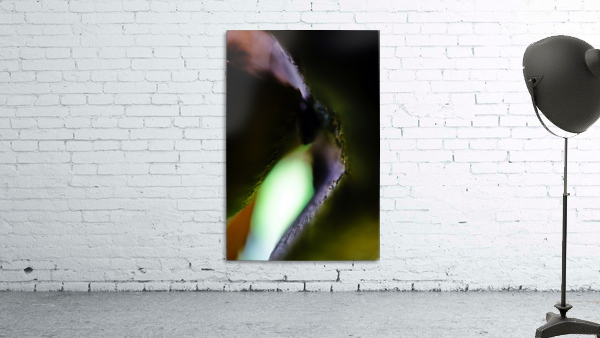 Abstract Macro Nature Photography 13