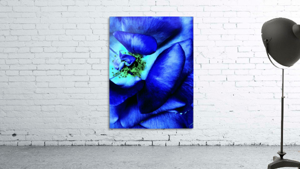Art of the blue rose 3
