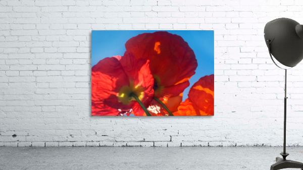 Red Poppy Sky