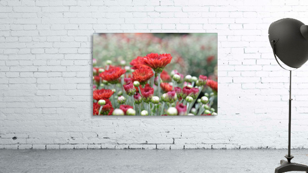Red Flower Photograph