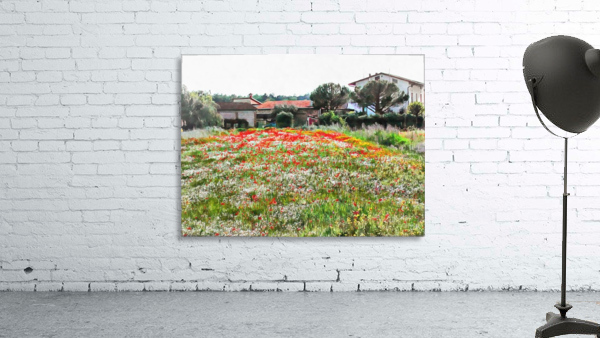 Old Farm House With Poppies