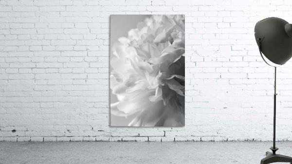 Softness in Black & White