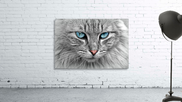 cat animal cat portrait mackerel