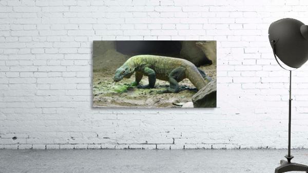 komodo dragon komodo lizard reptile