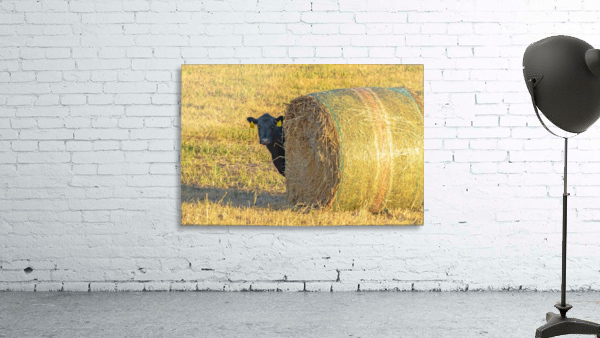 Hay.You Looking For Me