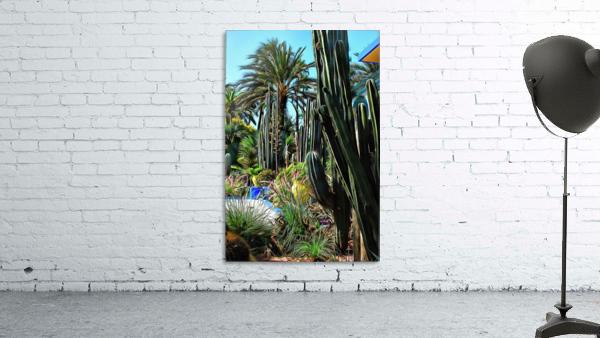 Giant Cacti Jardin Majorelle Marrakech