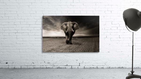 elephant animal africa safari