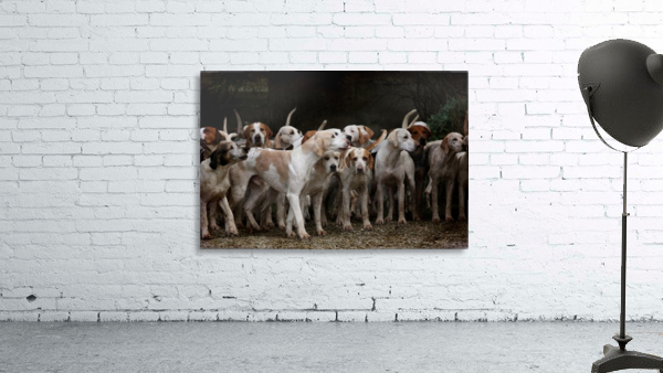 dog herd canine animal pet hounds
