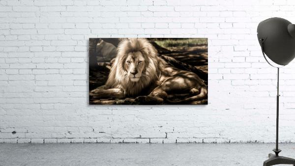 mammal lion animal portrait