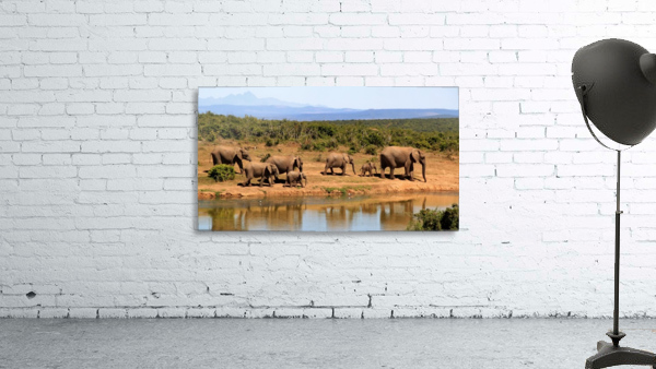 elephant herd of elephants