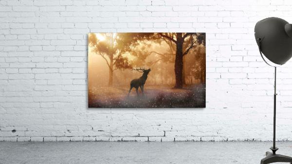 hirsch wild antler nature forest