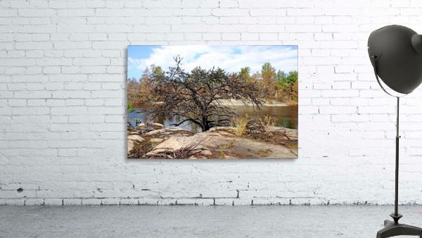 The Pine Tree I