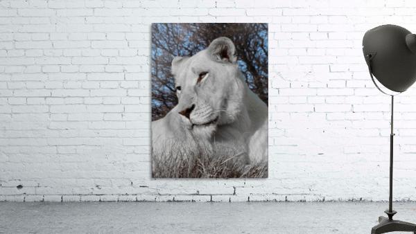 White Lion Female 1030593