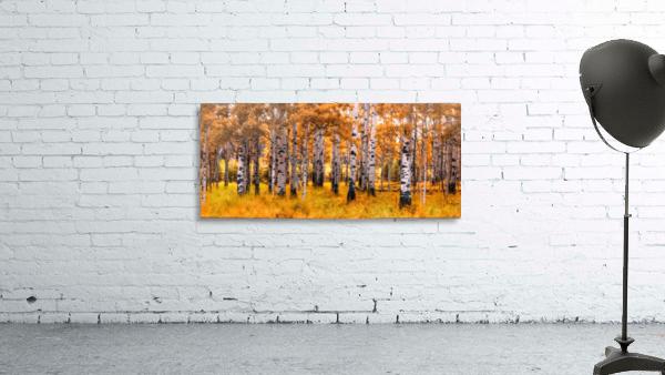 Birch Trees Autumn