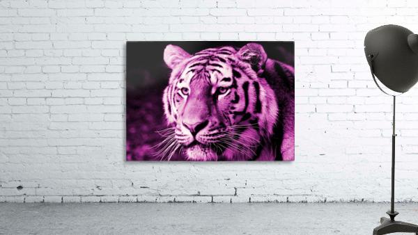 Tiger pop pink