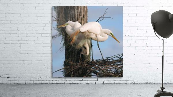Mating Season - Great Egrets I