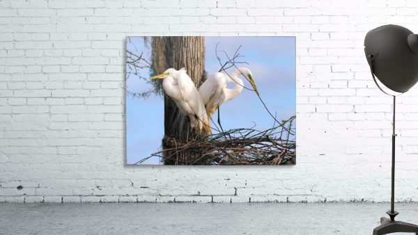 Mating Season - Great Egrets II