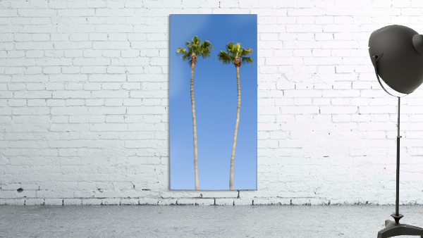 Idyllic Palm trees