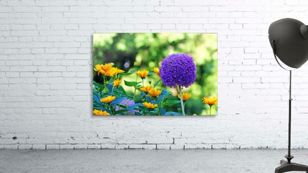 Allium And Wild Sunflowers