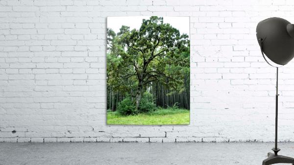 Larrys Tree