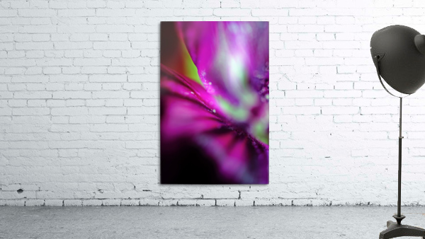 Abstract Pop Color Flower Photography 05