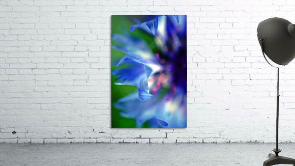 Abstract Pop Color Flower Photography 16