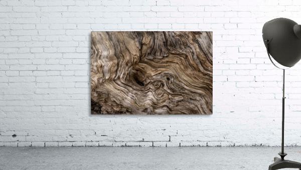 Banff Petrified Wood