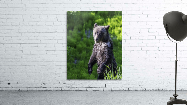 A grizzly cub named Pepper