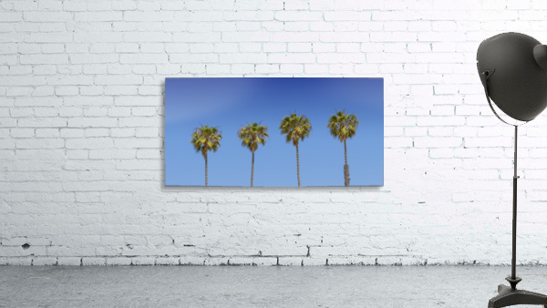 Lovely Palm Trees | Panorama